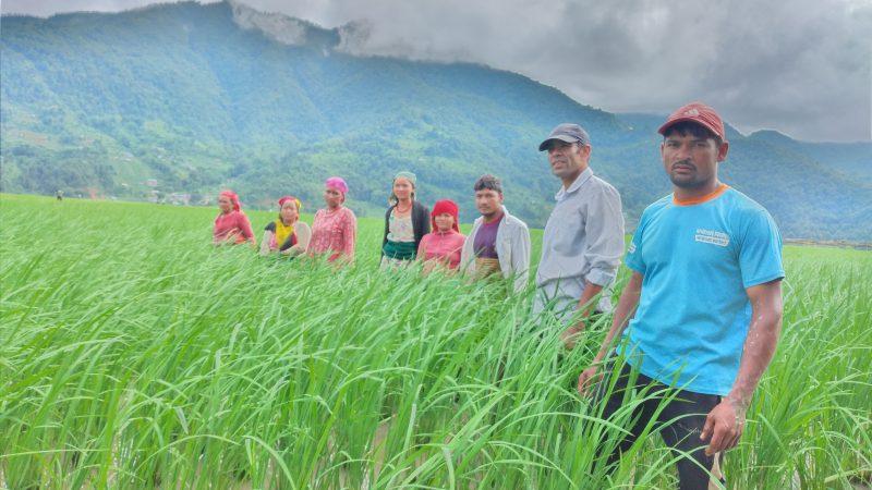 गोड्ने बेलामा पोखराका किसानले पाएनन् मल, उत्पादन घट्ने चिन्ता